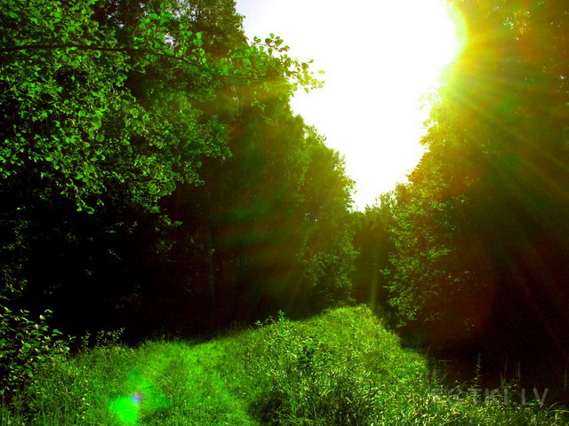 зелень =)