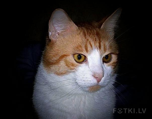кот Филимон