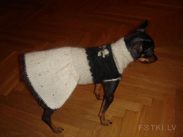 Связать костюм собаке своими руками