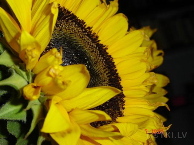 Солнечный цвЯточек