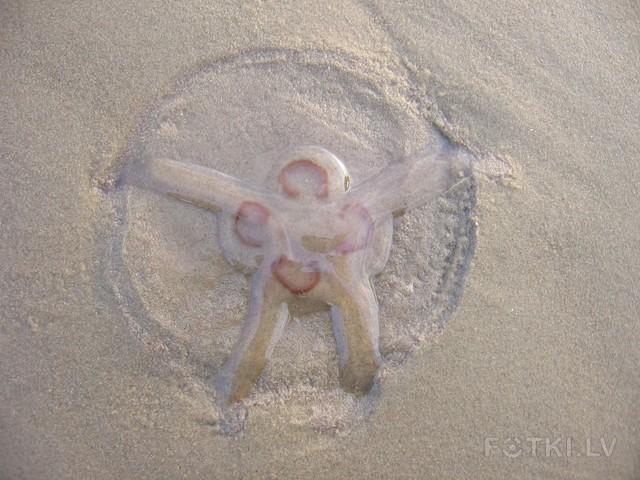 Leonardo da Vinci-модель медузы