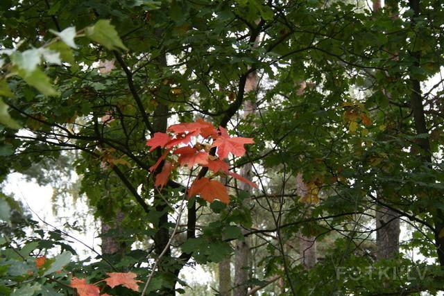 вот и осень наступила