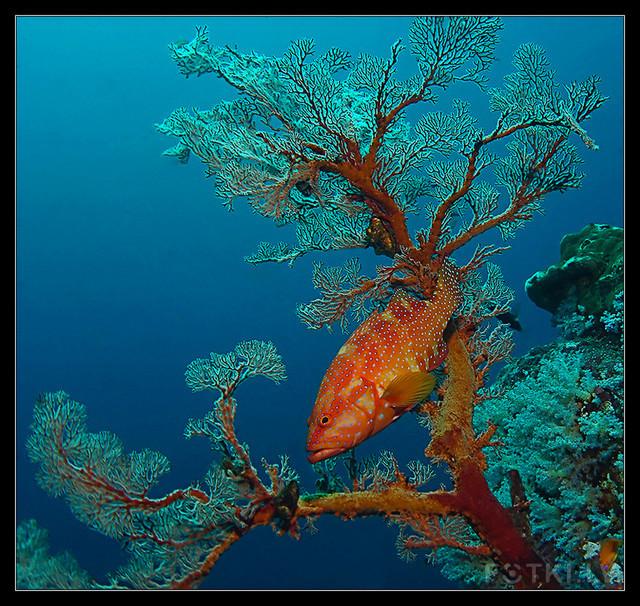 Покрытый инеем коралл