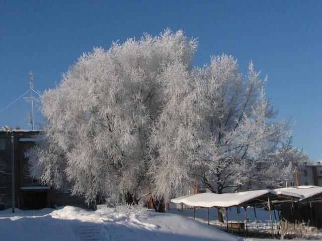 Однажды в студеную,зимнюю пору...