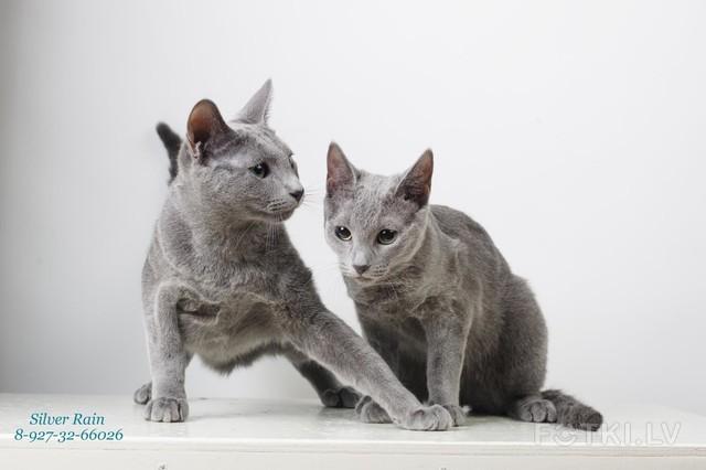 Amelia & Zephir