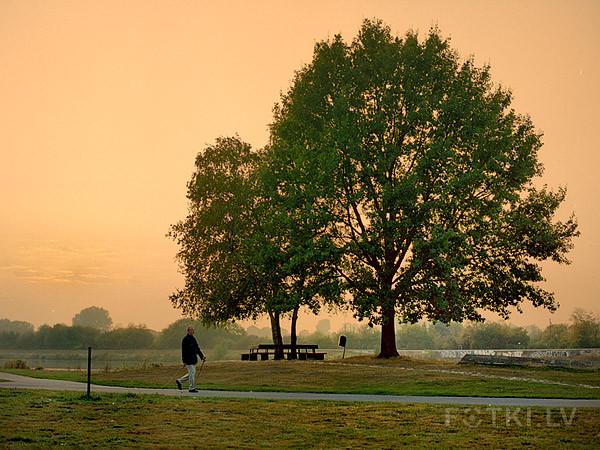 Morning walk (Mamiya 645Af, Portra 160VC)